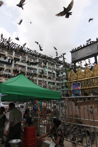 pigeons outside the temple.
